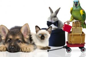 Интернет магазины товаров для животных